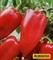 Семена перца Рубинова 1000 шт - фото 6794