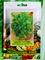 Сельдерей листовой Верде ди Таглио - фото 6913