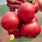 Семена томата Пинк Джаз F1 - фото 6945