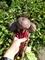 Семена свеклы Водан F1 - фото 7043