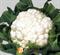 Семена капусты цветной Опал 1000 шт - фото 7064