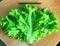 Семена салата Афицион 5 г (5000 шт) - фото 7098
