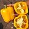 Семена перца Спрингбокс F1 (Казантип F1) 500 шт - фото 7196