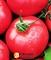 Семена томата Андромеда розовая F1 1г - фото 7260