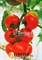 Семена томата Кристал F1 - фото 7568