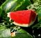 Семена арбуза Арашан F1 (WDL5003/ ВДЛ 5003 F1) - фото 7861