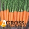 Семена моркови Элеганза  F1 (калибр. 1,6-1,8) 100 000 шт. - фото 8030