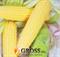 Семена кукурузы Кунфу F1 2500 шт - фото 8034