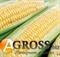 Семена кукурузы Растлер F1 5000 шт - фото 8035