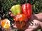 Семена перца Цитрина 50 г - фото 8129