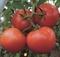 Семена томата Матиссимо F1 250 шт - фото 8167